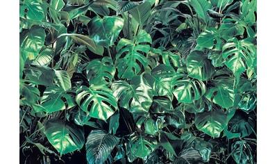 Komar Fototapete »Verdure«, bedruckt-Wald-geblümt, ausgezeichnet lichtbeständig kaufen