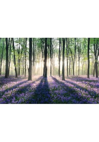 Home affaire Deco - Panel »Verzauberter Wald« kaufen