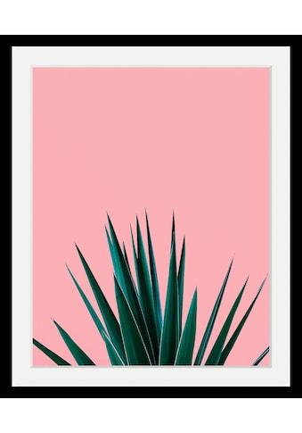 queence Bild »Pflanze«, in 3 Größen, gerahmt kaufen