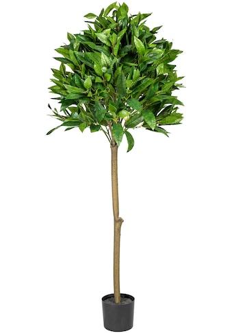 Creativ green Kunstbaum »Lorbeerkugelbaum« kaufen