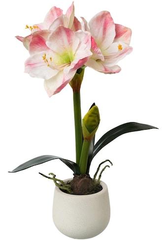 my home Kunstblume »Amaryllis« kaufen