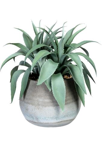 Creativ green Künstliche Zimmerpflanze »Agave«, im Zementtopf kaufen
