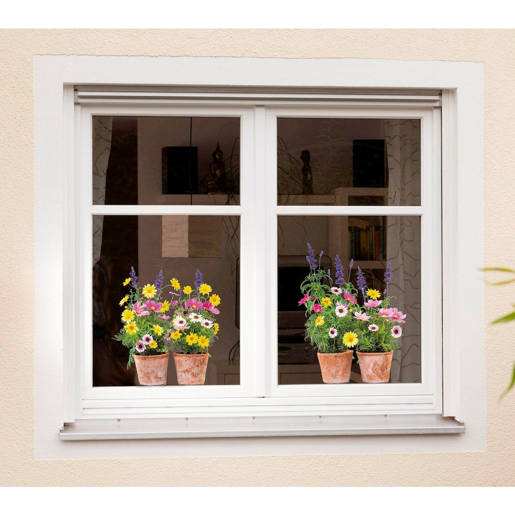 Komar Fensterbild, selbsthaftend