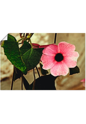 Artland Wandbild »Schwarzäugige Susanne«, Blumen, (1 St.), in vielen Größen &... kaufen