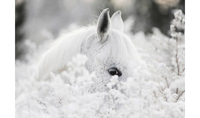 Consalnet Vliestapete »Weißes Pferd im Schnee«, Motiv kaufen