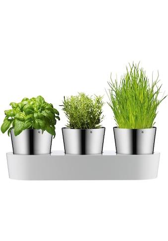 WMF Kräutertopf, mit Bewässerungssystem, Indoor kaufen