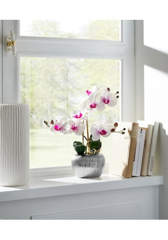 Home affaire Kunstpflanze »Orchidee« kaufen