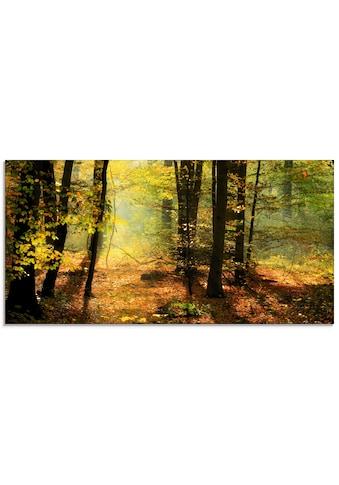 Artland Glasbild »Herbstlicht im Wald«, Wald, (1 St.) kaufen