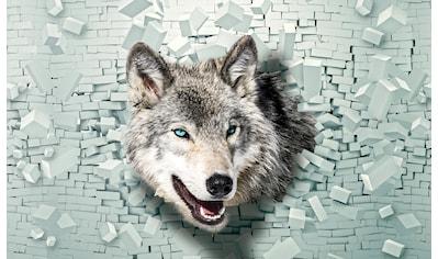 Consalnet Fototapete »Wolf kommt aus der Wand«, Motiv kaufen
