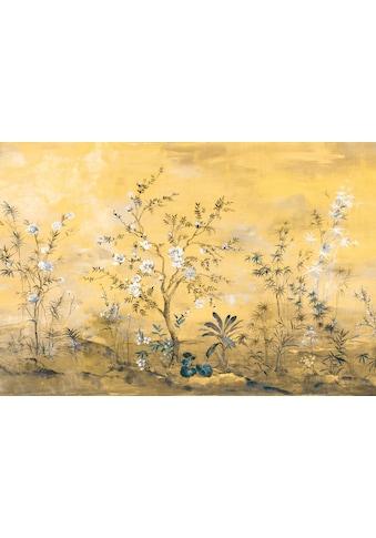 KOMAR Fototapete »Mandarin«, Größe: 368 x 248 cm kaufen