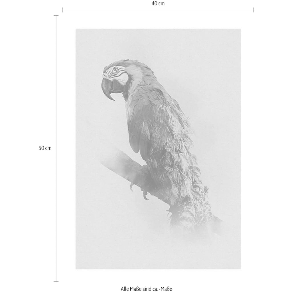 Komar Poster »Animals Paradise Parrot«, Tiere, Höhe: 50cm
