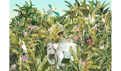 Komar Fototapete »Jungle Expedition«, bedruckt-Comic-Retro-mehrfarbig, BxH: 400x280 cm kaufen
