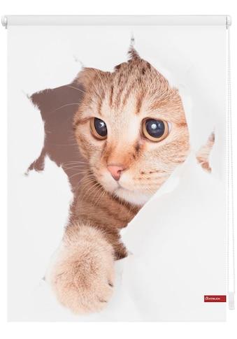 LICHTBLICK Seitenzugrollo »Klemmfix Digital Katze«, verdunkelnd, energiesparend, ohne Bohren, freihängend, bedruckt kaufen