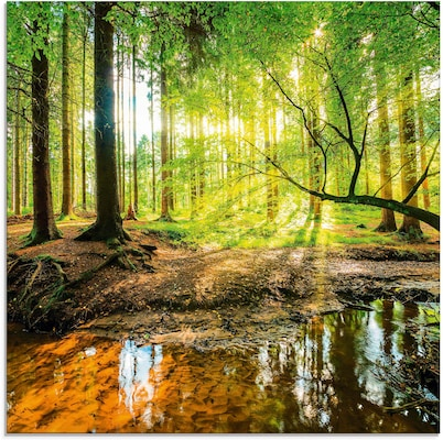 Acrylglasbild mit Waldmotiv