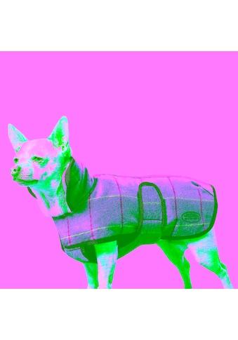 WeatherBeeta Hundejacke »Tweed Hundemantel II«, Mako-Jersey, (1) kaufen