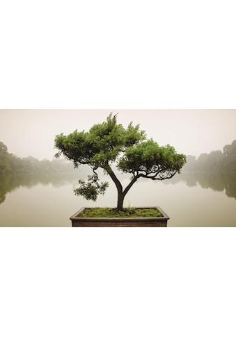 Home affaire Glasbild »Panom: Chinesischer Bonsaibaum«, 100/50 cm kaufen