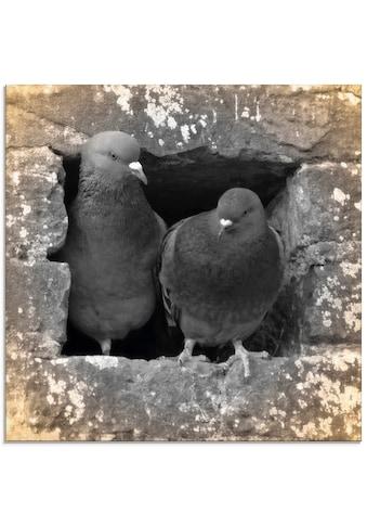 Artland Glasbild »Tauben Liebe«, Vögel, (1 St.) kaufen