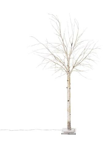 LED Baum »Crema«, Warmweiß, LED-Birke, Höhe 200 cm kaufen
