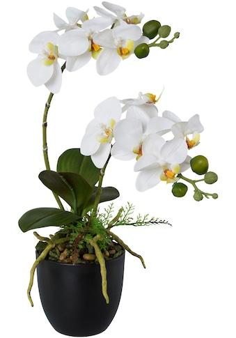Creativ green Kunstorchidee »Phalaenopsis«, im Kunststofftopf kaufen