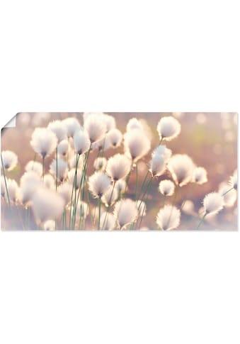 Artland Wandbild »Wollgraszauber im Moor« kaufen