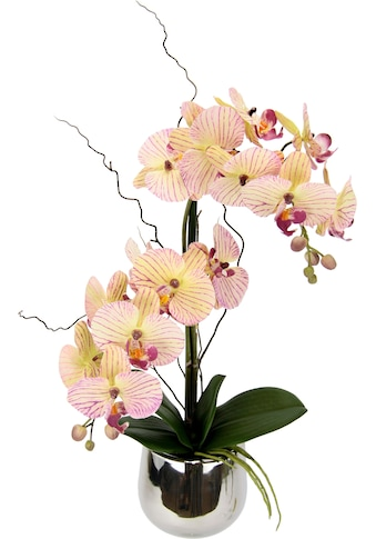 I.GE.A. Kunstpflanze »Phalaenopsis im Topf« kaufen