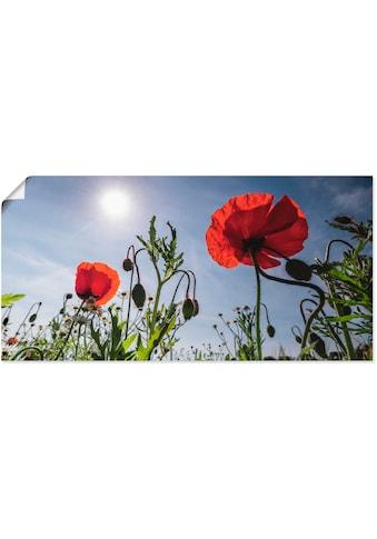 Artland Wandbild »Mohnblumen im Frühling« kaufen