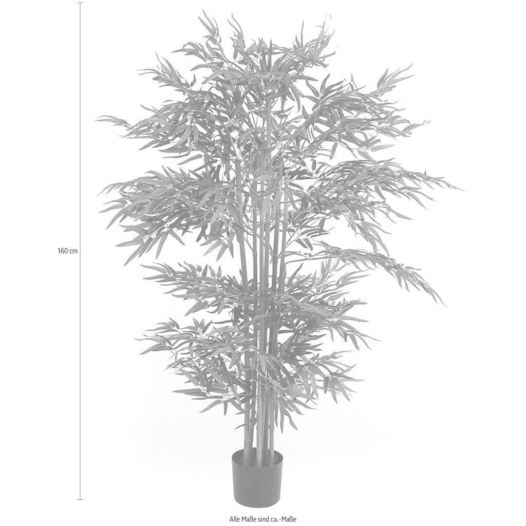 Schneider Kunstpflanze »Bambusbaum«