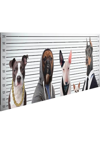 Home affaire Deco-Panel »Most Wanted Dogs« kaufen