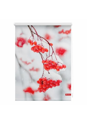 LICHTBLICK ORIGINAL Seitenzugrollo »Klemmfix Motiv Vogelbeeren«, Lichtschutz, ohne... kaufen