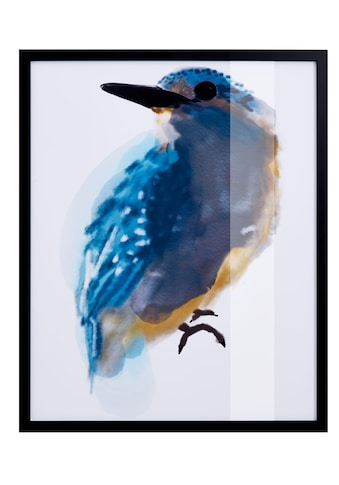 Guido Maria Kretschmer Home&Living Bild »Eisvogel«, mit schwarzem Rahmen kaufen