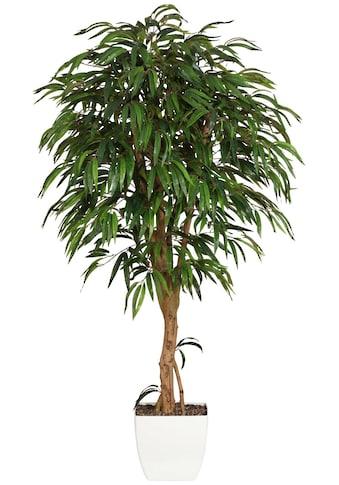 Creativ green Kunstpflanze »Weeping-Ficus« kaufen