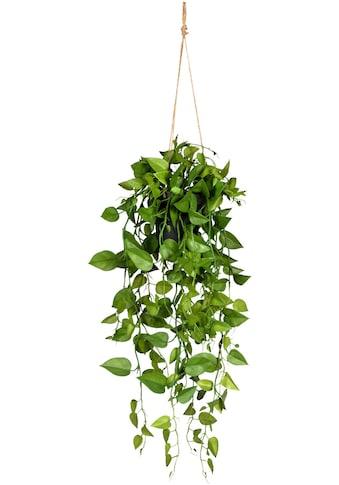 Creativ green Kunstranke »Philodendronhänger« (1 Stück) kaufen