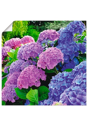 Artland Wandbild »Hortensien im Garten«, Blumen, (1 St.), in vielen Größen &... kaufen