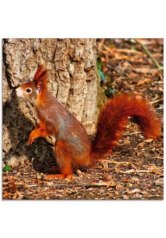 Artland Glasbild »Rotes Eichhörnchen will hoch hinaus«, Wildtiere, (1 St.) kaufen