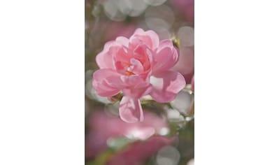 Komar Fototapete »Bouquet«, bedruckt-Wald-Meer, ausgezeichnet lichtbeständig kaufen