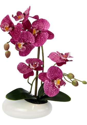 I.GE.A. Kunstpflanze »Phalaenopsis in Schale« kaufen