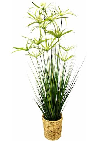 I.GE.A. Kunstpflanze »Zyperngras in Wasserhyazinthentopf« kaufen