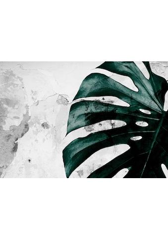 CONSALNET Vliestapete »Grüne Monstera Blume«, in verschiedenen Größen kaufen
