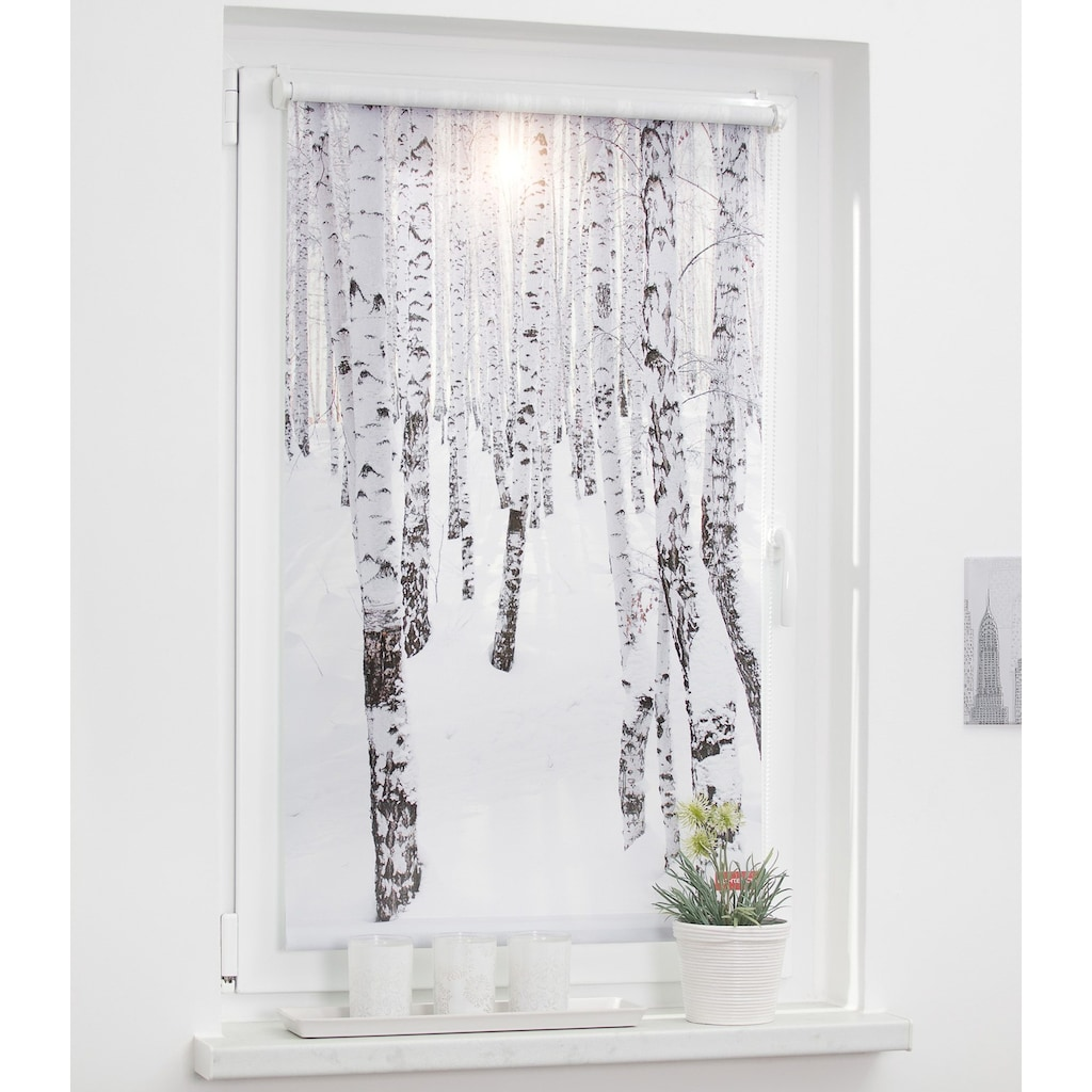 LICHTBLICK ORIGINAL Seitenzugrollo »Klemmfix Motiv Birkenwald«, Lichtschutz, ohne Bohren, freihängend, bedruckt