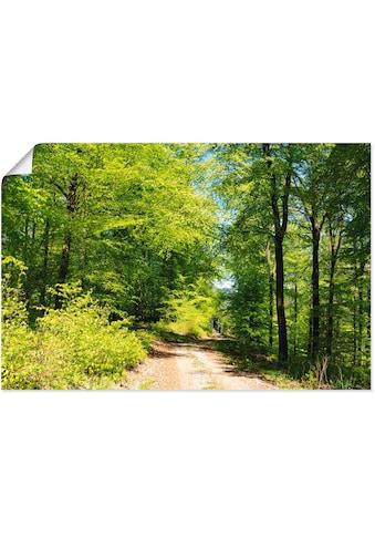 Artland Wandbild »Blauer Himmel über dem Wald im Mai«, Wald, (1 St.), in vielen Größen... kaufen