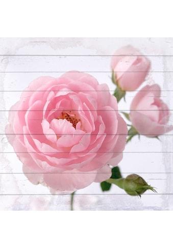 queence Holzbild »Pinke Blüte«, 40x40 cm kaufen