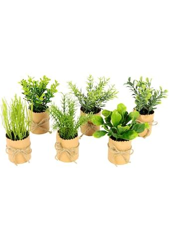 I.GE.A. Kunstpflanze »Kräutersortiment« (6 Stück) kaufen