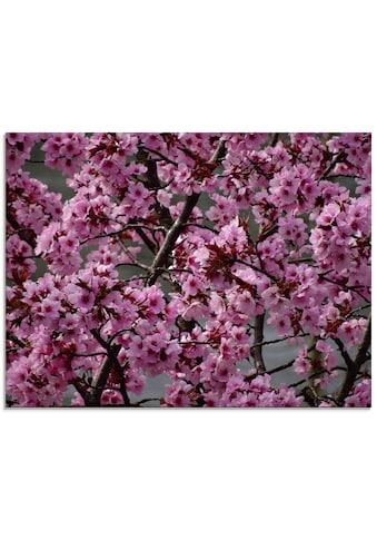 Artland Glasbild »Japanische Zierkirschen Blüte«, Bäume, (1 St.) kaufen