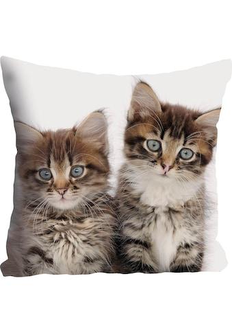 queence Kissenhülle »Patrick«, (1 St.), mit Katzen kaufen